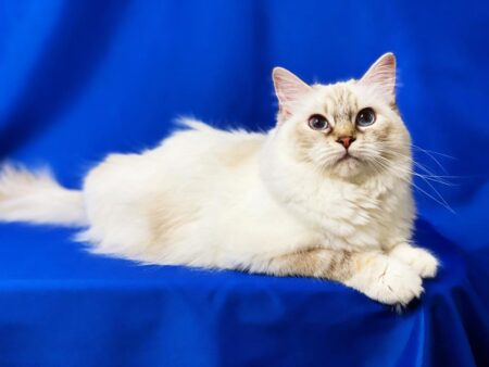 Longfellow Princess Luna